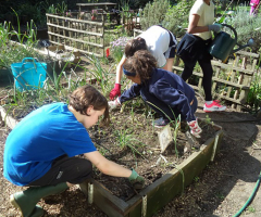 Allotment Open Day - Sunday 17 June