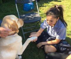 Pupils meet Guide Dogs in training