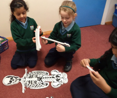 Year 1 study the Skeletal System