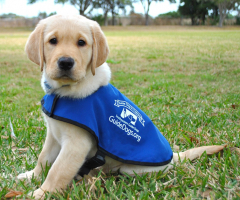 Support the Guide Dog Charity